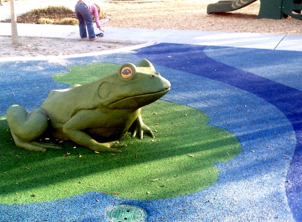 Frog feature at Maddux