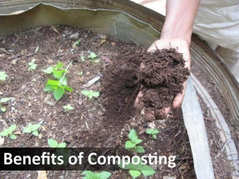 5 Things to Avoid When You StartWormComposting - RedWormFarms.com