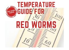 Temperature Guide for Red Worms