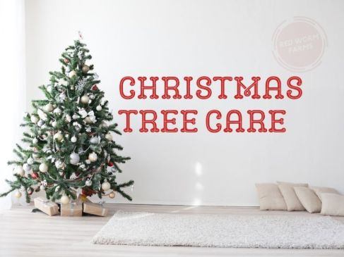 Christmas Tree Care RedWormFarms.com