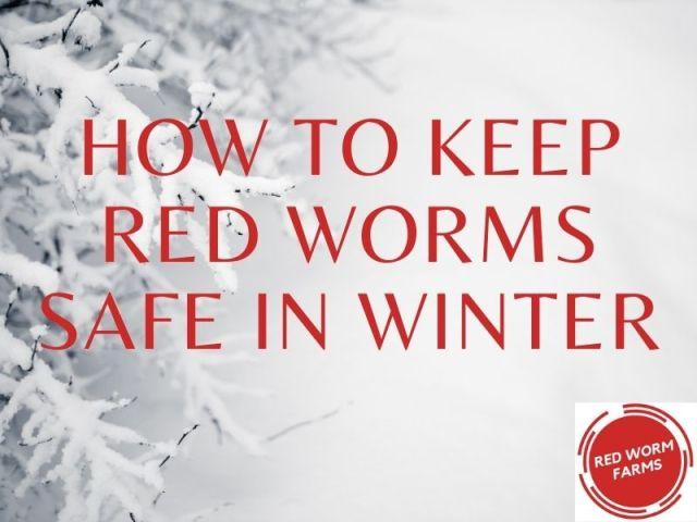 How to Keep Red Worms Safe in Winter RedWormFarms.com