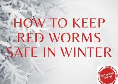 How to Keep Red Worms Safe in Winter