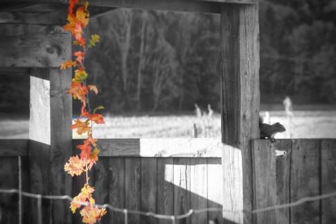 Burlington Squirrel, VT