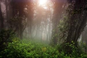 Dense Foggy Sun