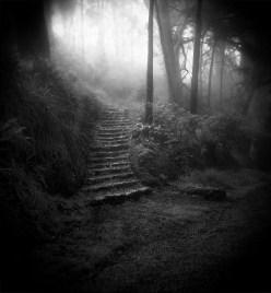 Holga Steps