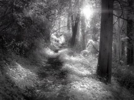 Hazy Path (Infrared)