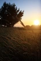 Mendocino Cottage Sunset