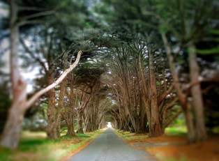 Coastal Trees In Perspective