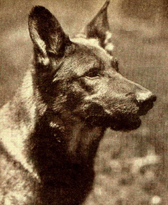 Rin Tin Tin (credit: http://www.silentsaregolden.com)