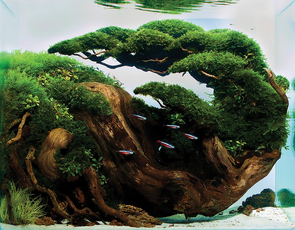 Unbounded Passions Aquatic Gardeners Aquascape Winners