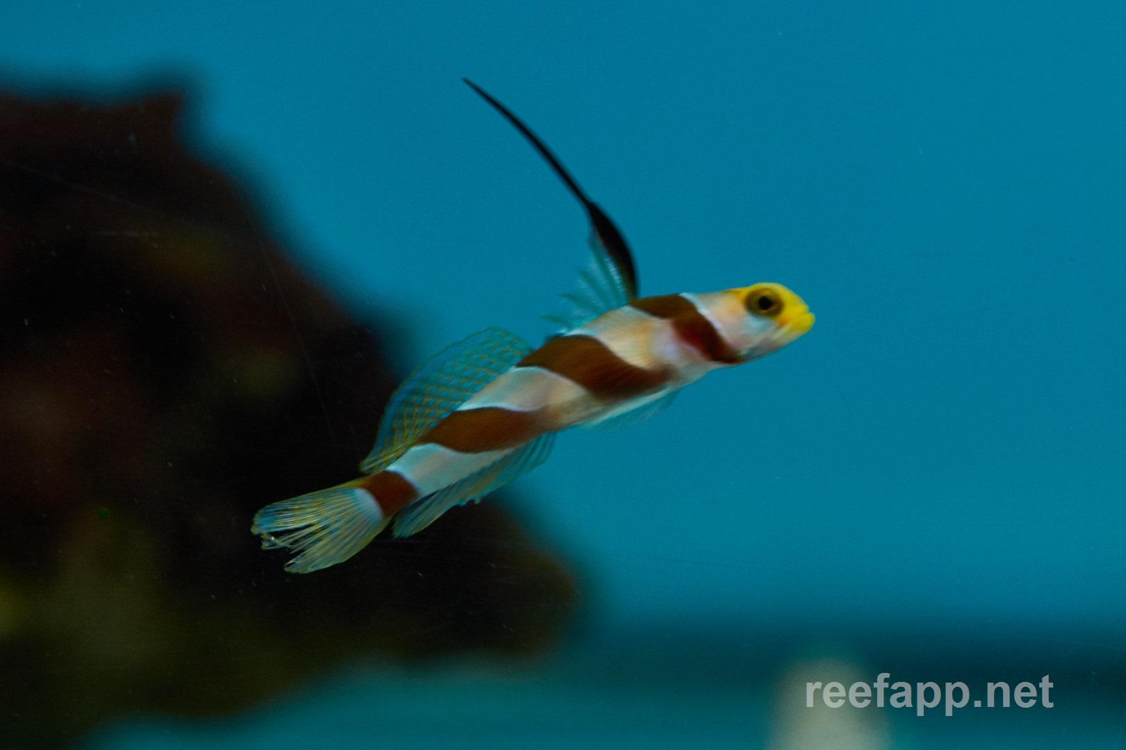 Nematodes In Aquarium Fish  1000 Aquarium Ideas