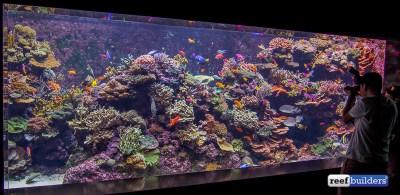 Full Tank Shots of S.E.A. Aquarium's incredible public ...
