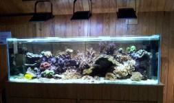 Aquário de recife