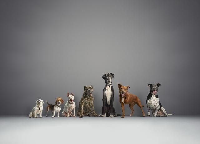 Subaru announces wins for Make A Dog's Day campaign