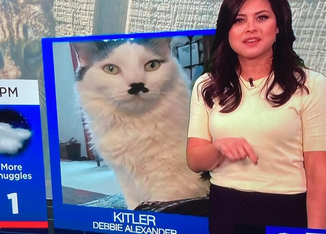 """KC meteorologist apologizes for featuring """"Kitler"""" cat"""