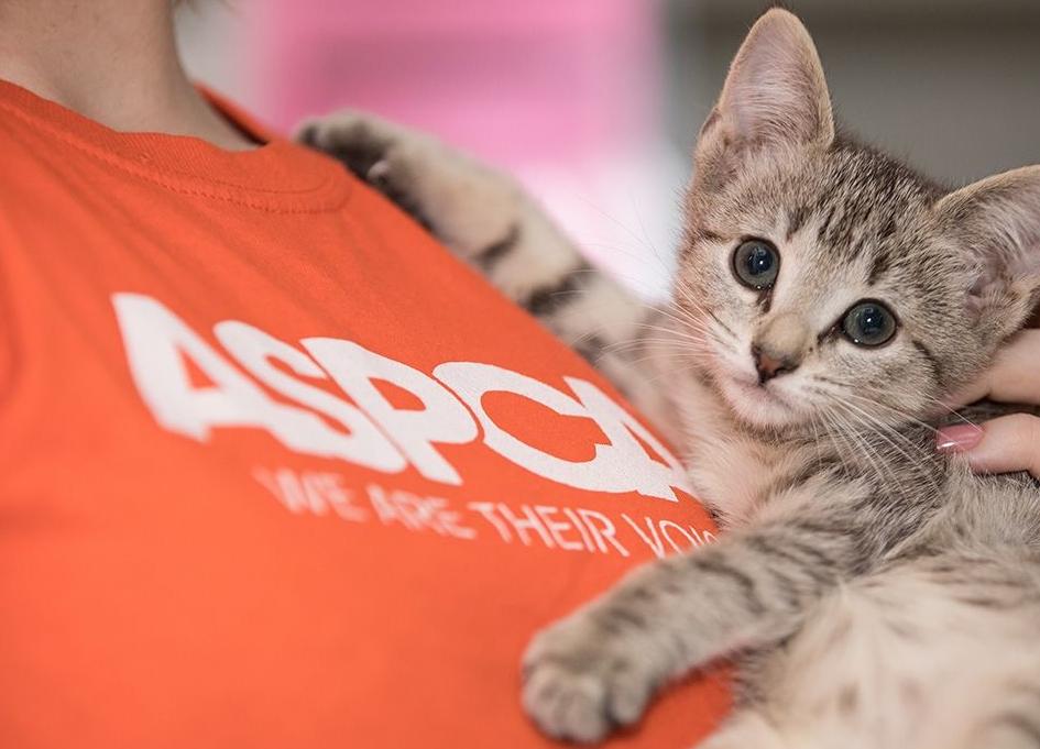 ASPCA names Laughlin Constable as digital AOR