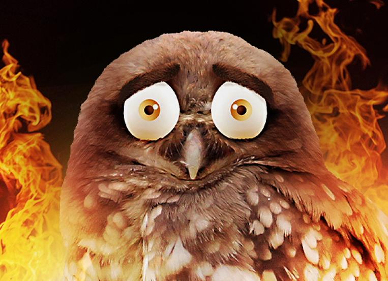 P+N's Superb Owl aids Aussie wildlife during Super Bowl