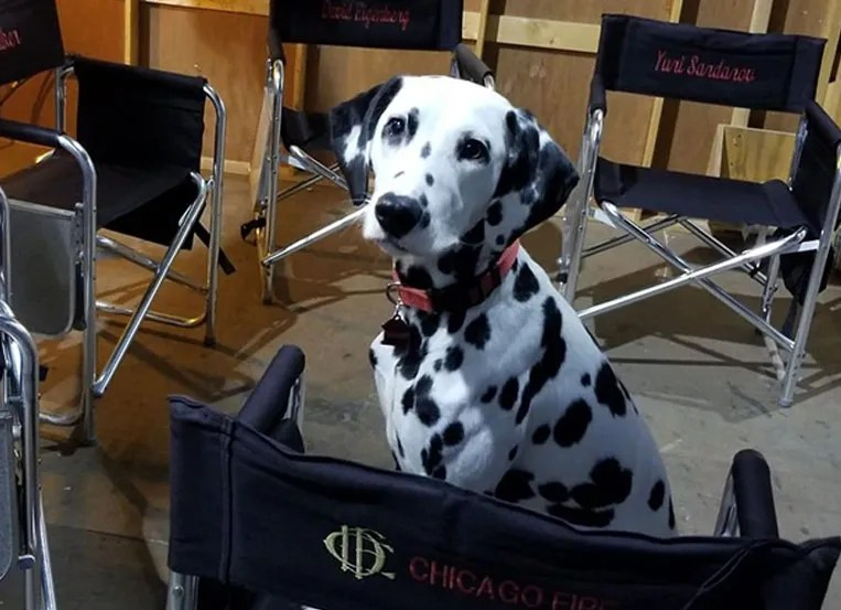 'Chicago Fire' firehouse dog takes center stage