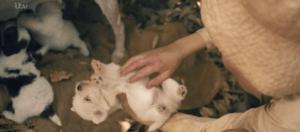 the durrells in corfu puppies