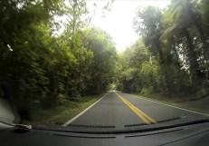 raod trip trees