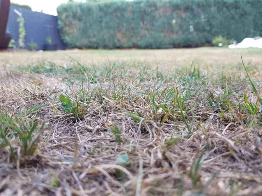 Verbrannten Rasen Vertikutieren Oder Soll Man Es Lassen Reens Blog