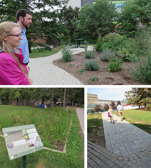Native plant gardens, constructed wetland and permeable walkway at UW