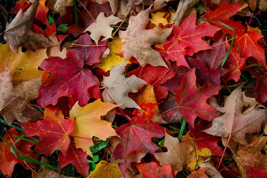 Fall Leaves Road Wallpaper October 2014 Donald Reese Photography