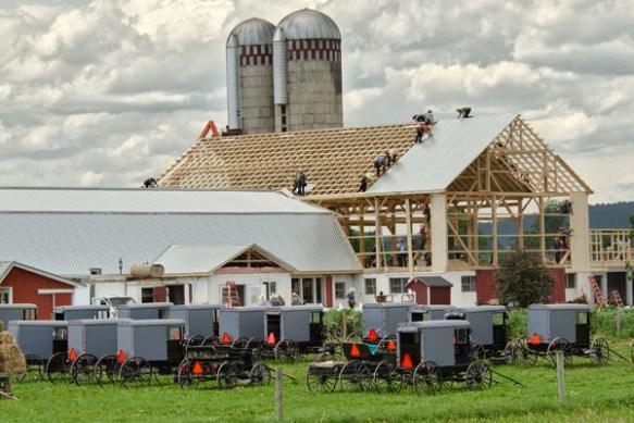 amish barn raising donald
