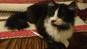 vaip ja kass