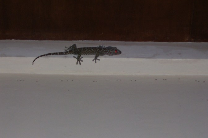 """Creepy little red-eyed lizard. Not sure if this is the one called """"tuko."""" There were a LOT of these over there."""