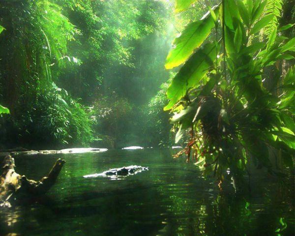 Amazonia-Brasileira