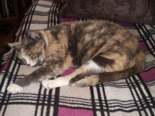 Day 149:  Kitty Christmas at Pets, Inc.! 10