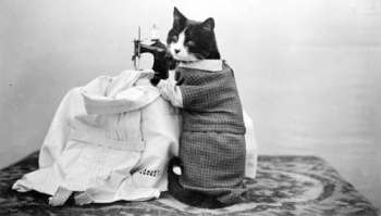 A Cat using a sewing machine!?!