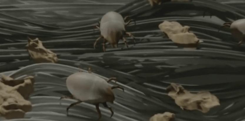 Des colonies invisibles de plusieurs millions d'acariens se nichent avec prédilection dans la chambre à coucher, au niveau de la literie, notamment dans les matelas et les oreillers, mais aussi les couettes et édredons. © Stallergenes