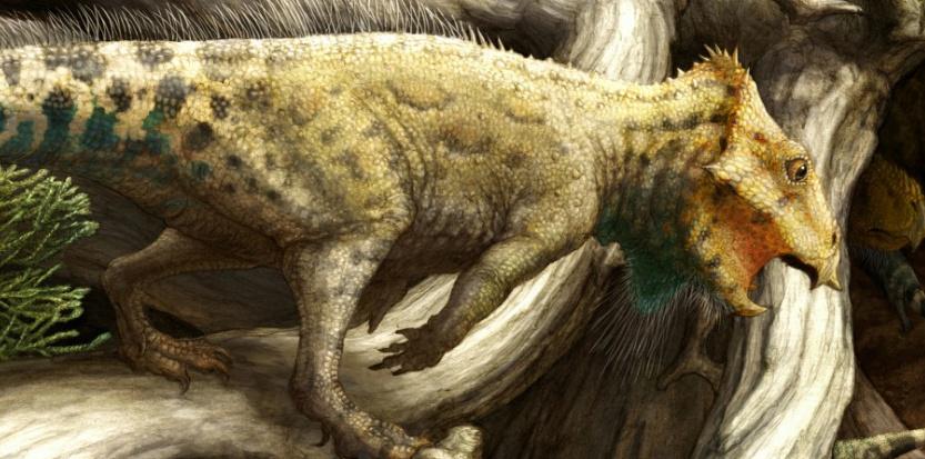 L'aquilops americanus, le plus vieux dinosaure à corne. Brian Engh, courtesy of Raymond M. Alf Museum of Paleontology.
