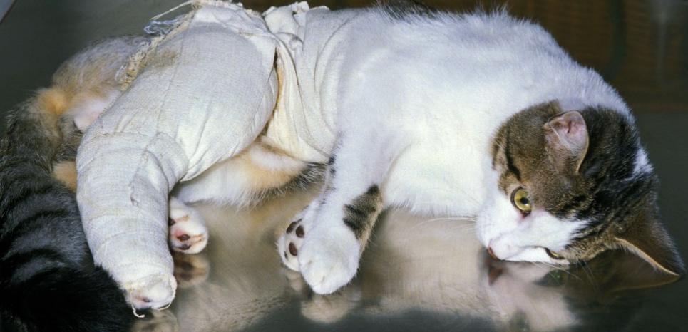 Un niveau élevé de vitamine D est bon signe pour le chat hospitalisé. ©Gerard Lacz / Rex Featu/REX/SIPA