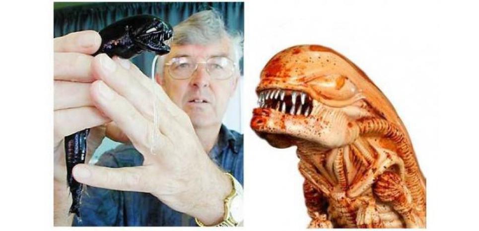 """Le """"black dragonfish"""" ou une restitution d'Alien dans l'océan. © WWF"""