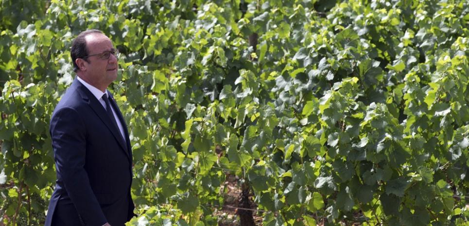 François Hollande dans le vignoble de Gevrey-Chambertin, le 23 juillet 2015 (PHILIPPE WOJAZER / POOL / AFP)