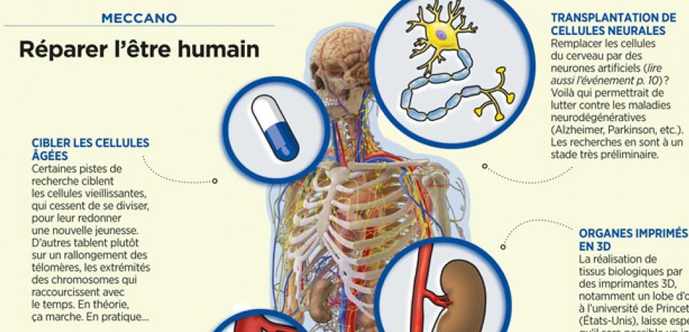 Comment réparer l'être humain. ©SPL/COSMOS - Betty Lafon/Sciences et Avenir