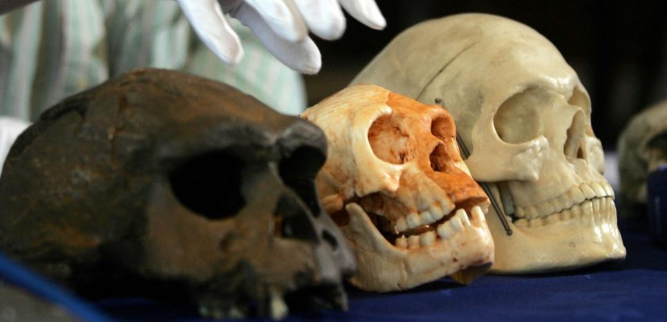 """Une photo du 27 octobre 2004, avec une reproduction du crâne de l'homme de Florès, surnommé le """"Hobbit"""" en raison de sa petite taille. ©JIM WATSON / AFP"""
