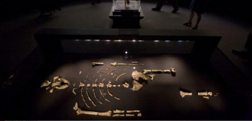 Le squelette de Lucy, ici exposé à Houston en 2007,continue de fasciner les chercheurs MICHAEL STRAVATO/AP/SIPA
