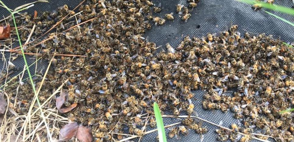 Des millions d'abeilles sont mortes aux Etats-Unis après l'épandage d'un insecticide controversé pour lutter contre la propagation du virus Zika © Facebook / Flowertown Bee Farm and Supplies