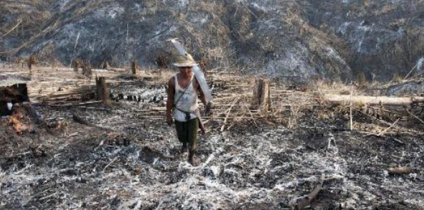 Un Birman ramasse les restes d'arbres calcinés dans la région de Bago le 5 avril 2014<br /><br /><br /><br /><br /><br /><br /> (c) Afp