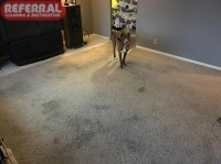 best carpet for bedrooms with dogs best carpet for ...