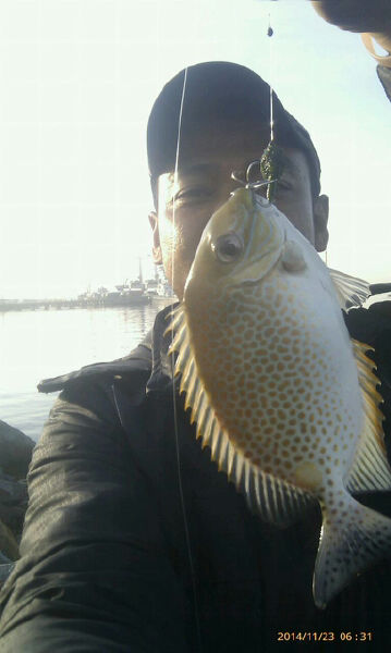 Ikan Ketang Ketang : ketang, Umpan, Ketang, Ketang,, Daftar, Harga, Mancing, Bulan, Januari, Online