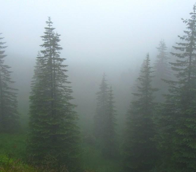 Experiencing brain fog