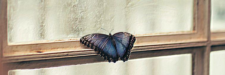 Vlinder achter een raam