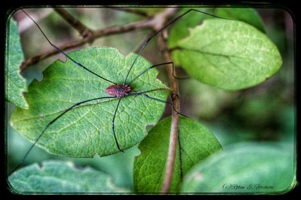 spider54