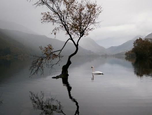 A Swansong – Adya Chauhan