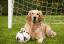 Napi cuki: Minden focistát kicselezett a pályára beszaladó kutya! – videóval